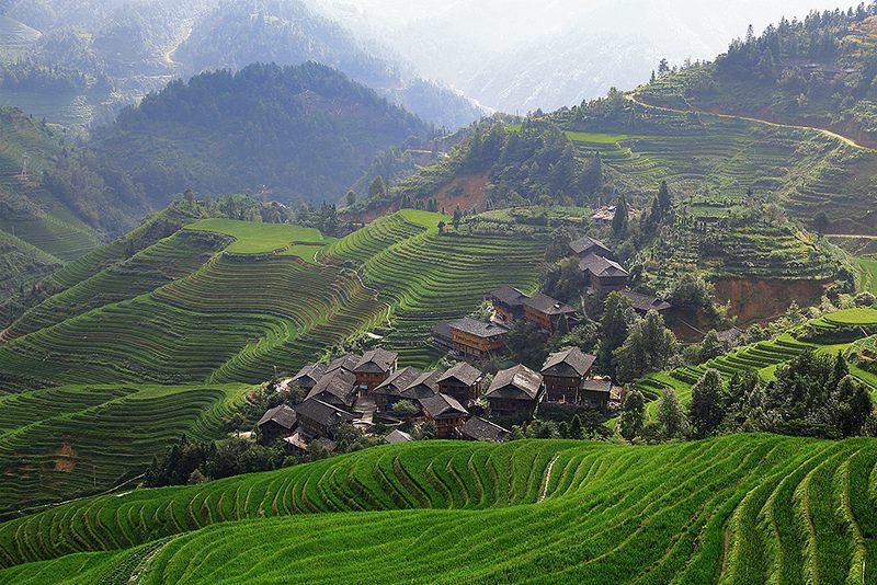 Les rizières de Guilin