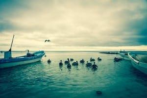 Holbox ile Cancun