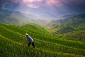 Les rizières de l'Échine du Dragon
