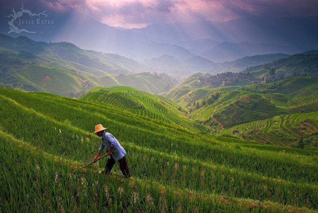 Les rizières en terrasses de l'Échine du Dragon