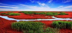 Panjin : plage rouge de l'orient