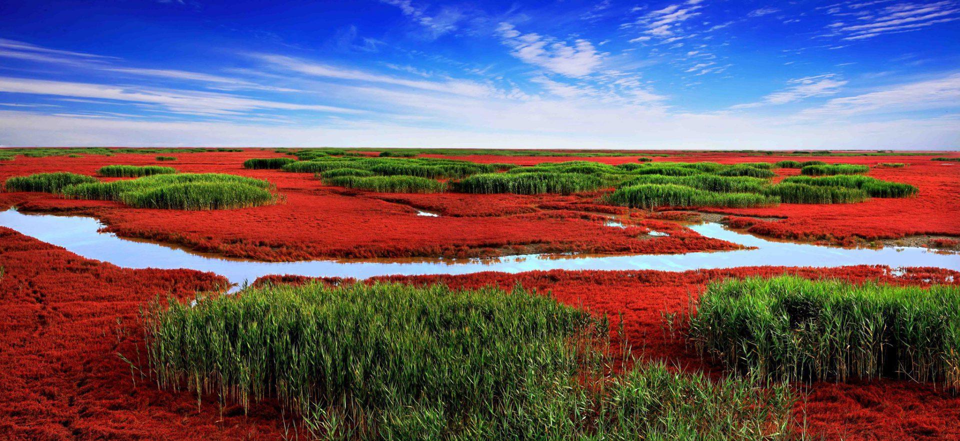 Panjin : la plage rouge de l'orient