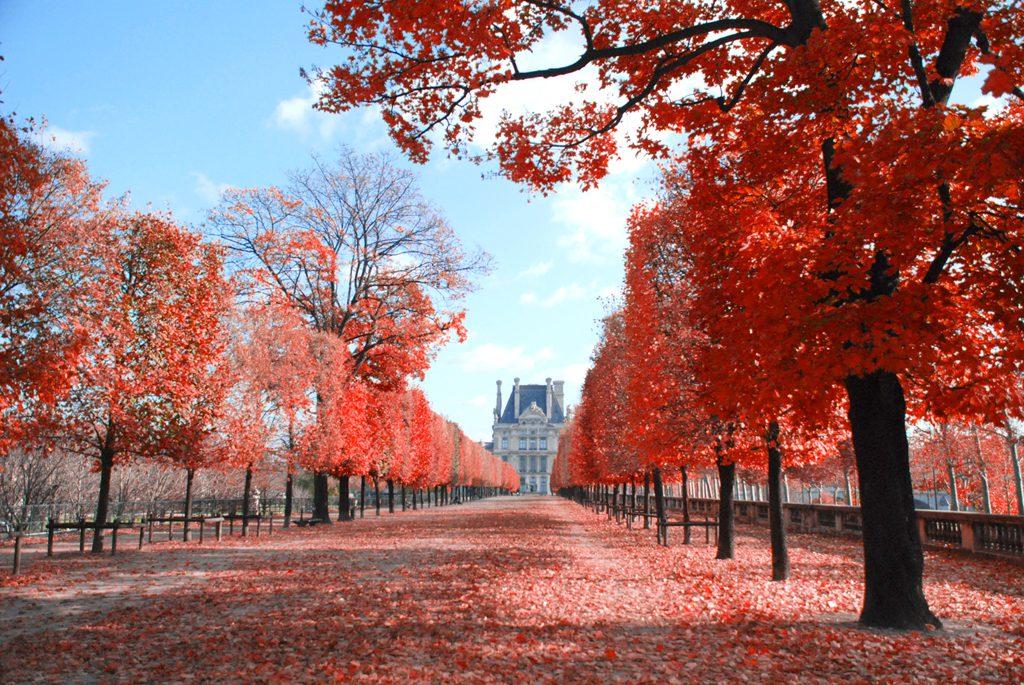 Jardins des Tuileries à Paris - Quoi faire