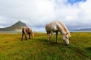 Guide gay sur l'Islande
