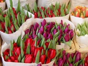Marché aux fleurs d'Amsterdam - tulippes