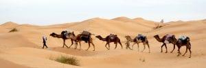 Destination gay de la Tunisie