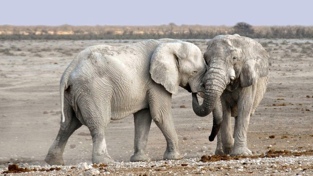 Safari africain gay en Namibie