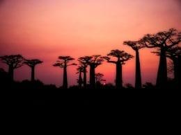 Guide voyage avant de partir pour le Madagascar