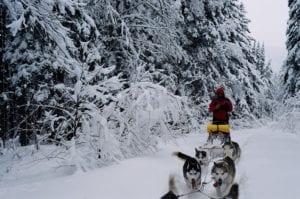 Traineaux à chiens : l'expérience ultime en hiver à faire à Québec