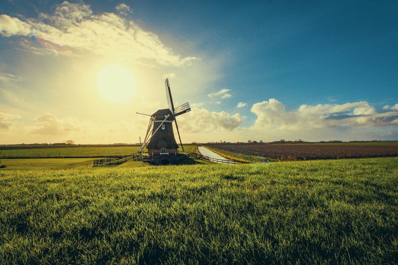 Les Pays-Bas : le pays gay friendly où les chiens sont autorisés