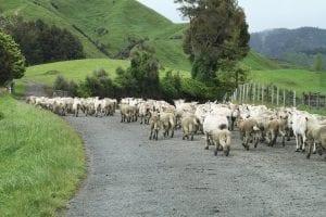 Bien manger en Nouvelle-Zélande