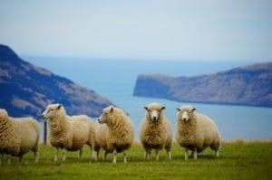 Goûter la Nouvelle-Zélande