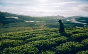 Visite des producteurs de thé équitable du Sri Lanka : à faire lors de votre prochain voyage