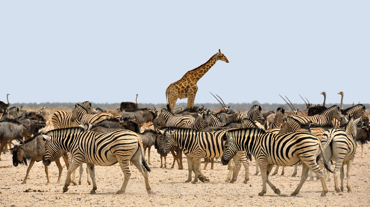 Beauté naturelle de la Namibie