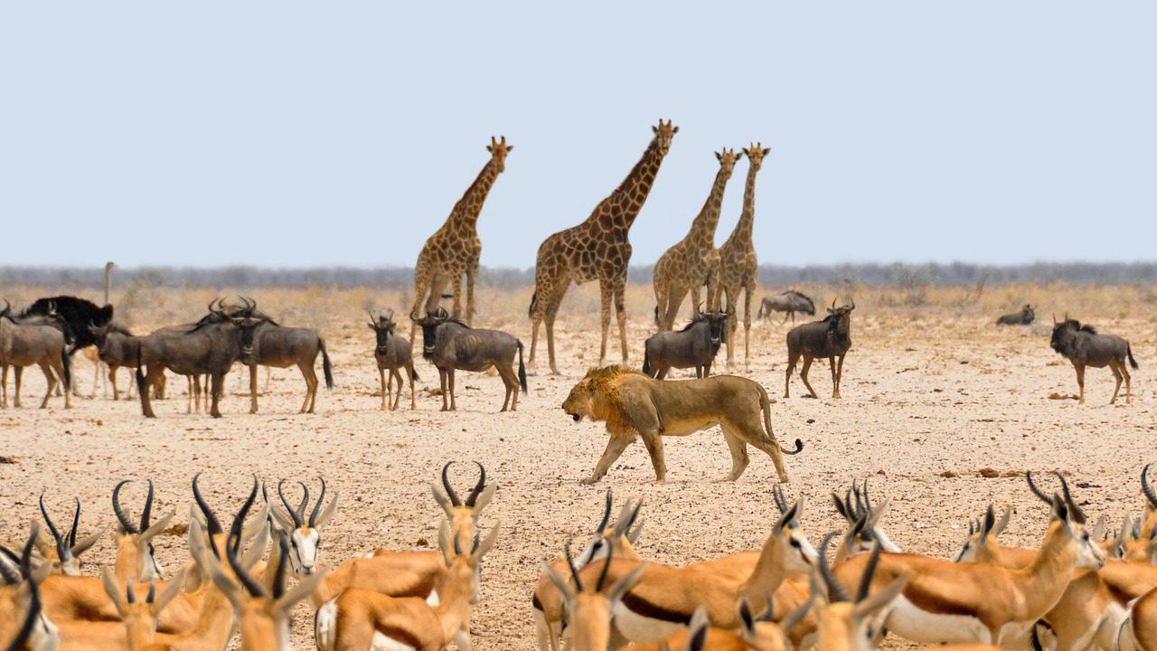 Faune prolifique de la Namibie