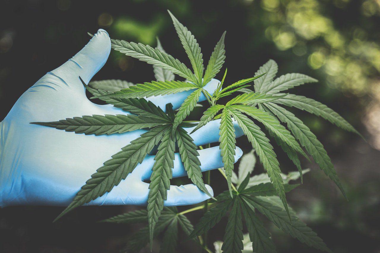 Je pensais qu'il était légal de fumer de la marijuana en Hollande?