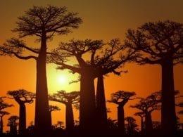 Tourisme à Madagascar: petit guide pour visiter le pays en liberté