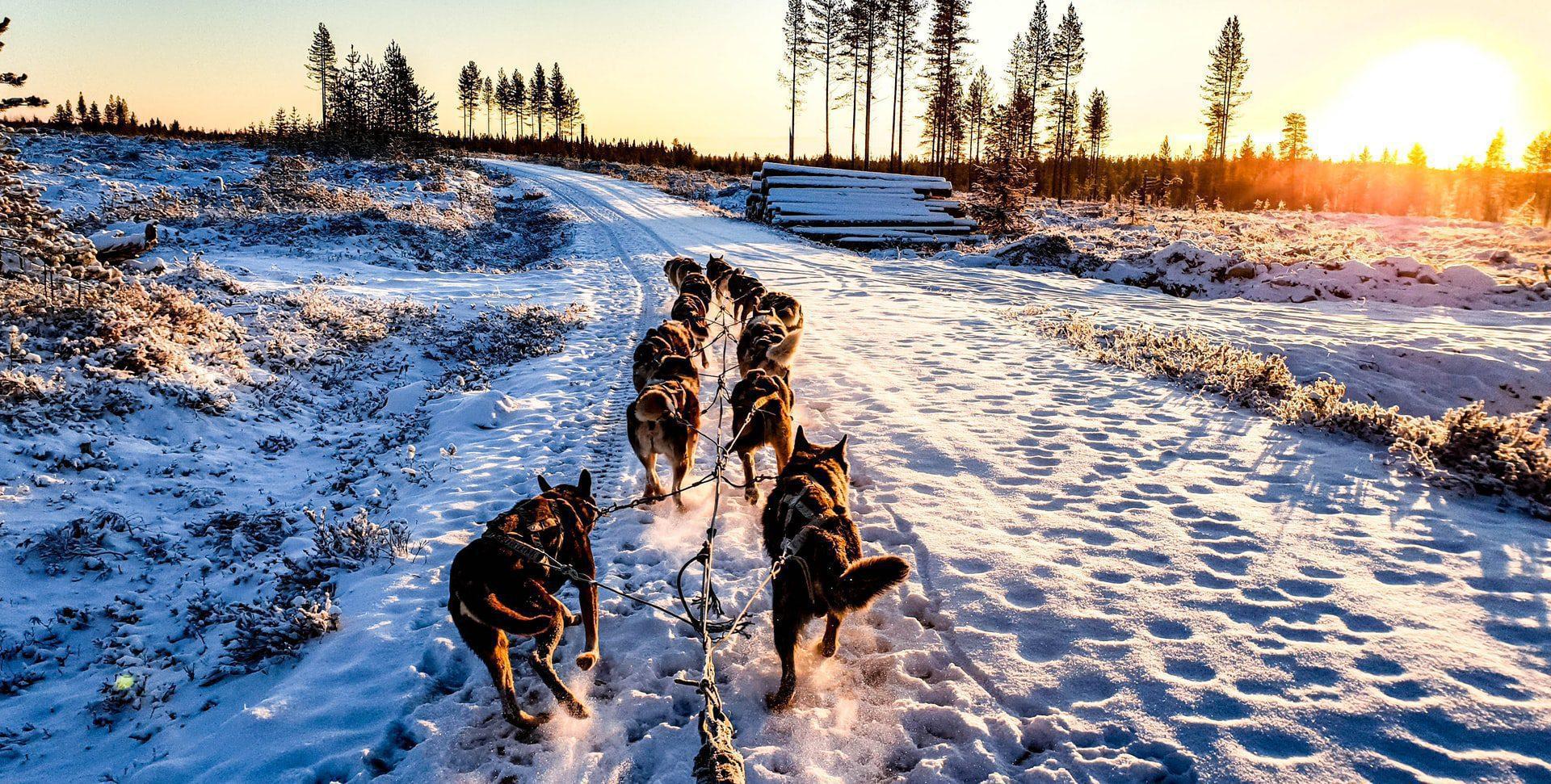 Profitez de la Finlande en levrette