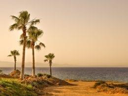 Les charmes indiscrets de Palm Springs