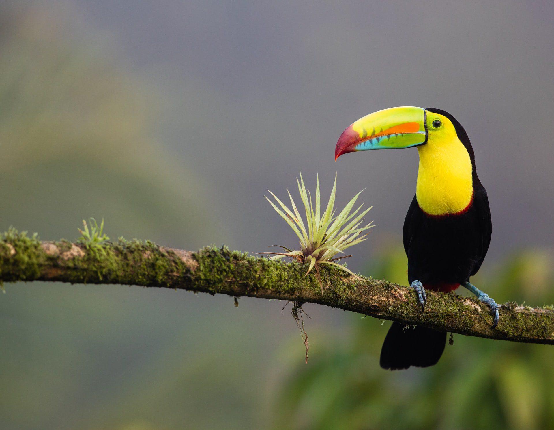 Destination gay du Costa Rica