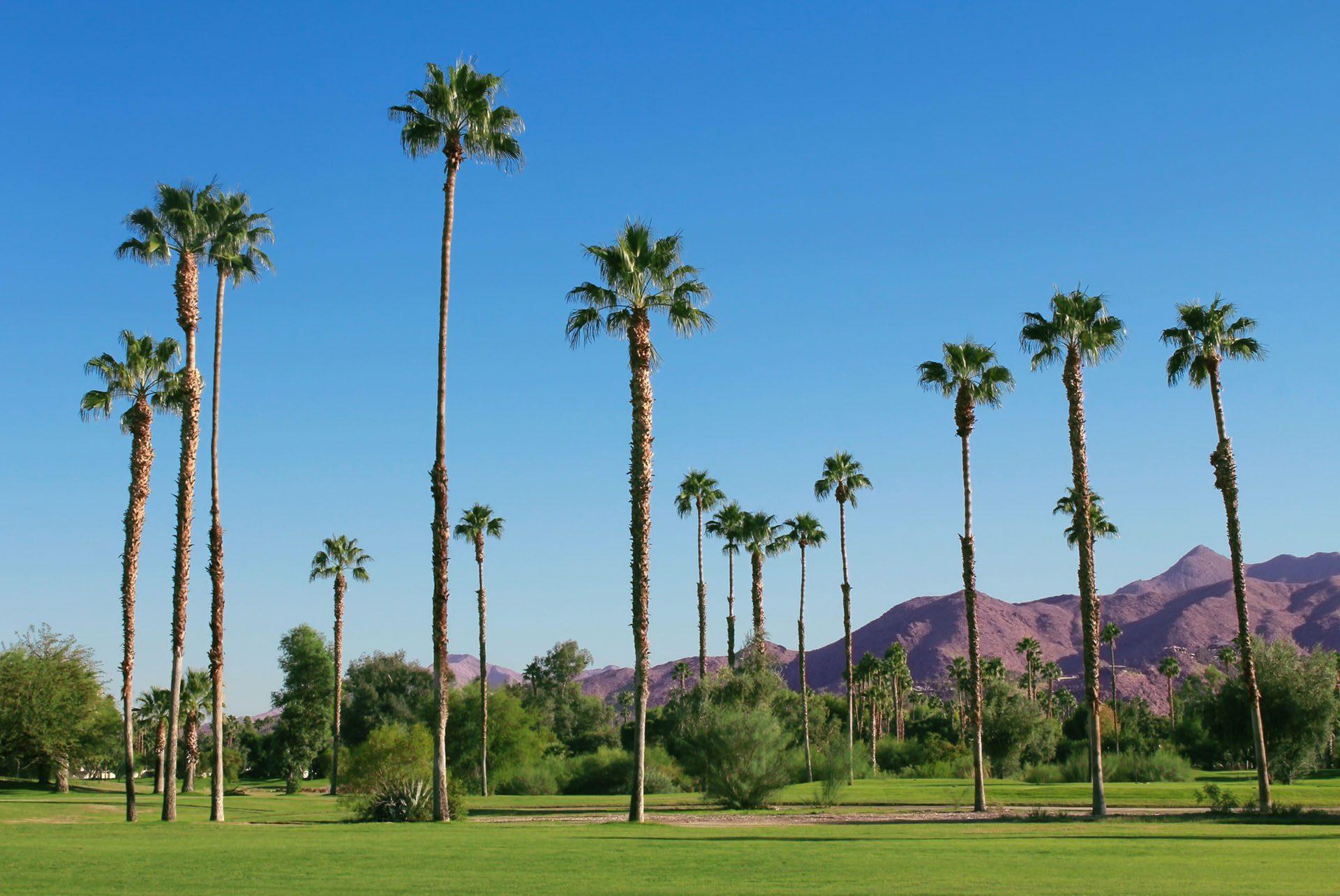 Visite gay de Palm Springs
