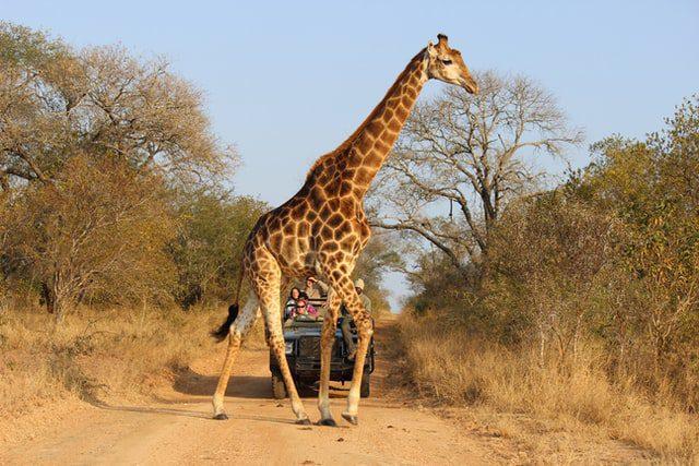 Safari gay en Afrique du Sud