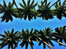 Une journée nature dans le Jardin Botanique de Rio de Janeiro