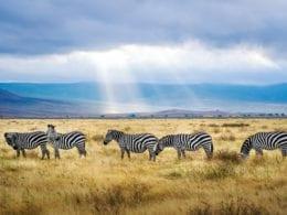 Une visite touristique de la Tanzanie