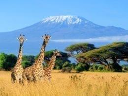 Les visites incontournables à faire au Kenya