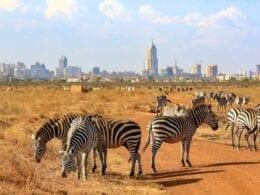 Votre premier voyage à Nairobi : ce que vous devez savoir